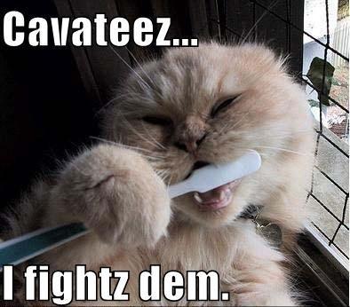 http://media.ebaumsworld.com/2008/08/885650/funny-pictures-cat-brushes-teeth.jpg
