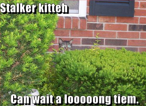 http://media.ebaumsworld.com/2008/08/885660/funny-pictures-stalker-cat-will-wait-for-you.jpg