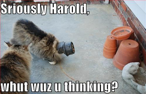 http://media.ebaumsworld.com/2008/08/905670/funny-pictures-cat-has-something-stuck-on-head.jpg