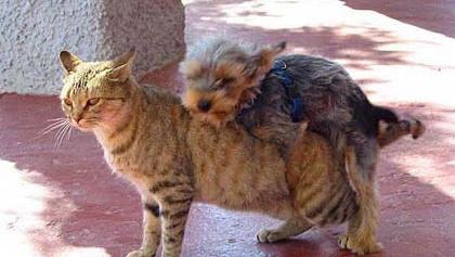 dog-hump11.jpg