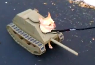 tank [Video] Dog Tank Halloween Costume Funny Picture