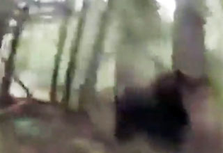 bear [Video] Bear Scares Jogger in Woods Funny Picture