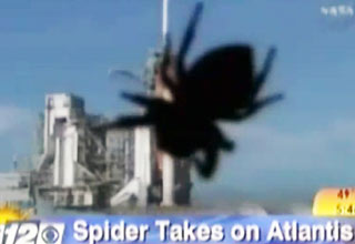 spider [Video] Anchorwoman Freaks Out Over Spider Funny Picture