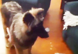 dog [Video] Dog Runs Into Room And Shuts Door Funny Picture