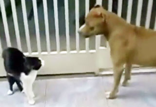 confront [Video] The Cat Unleashed Funny Picture