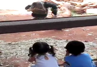monkey [Video] Chimp Surprise Funny Picture
