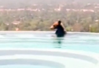bear [Video] Backyard Pool Surprise Funny Picture