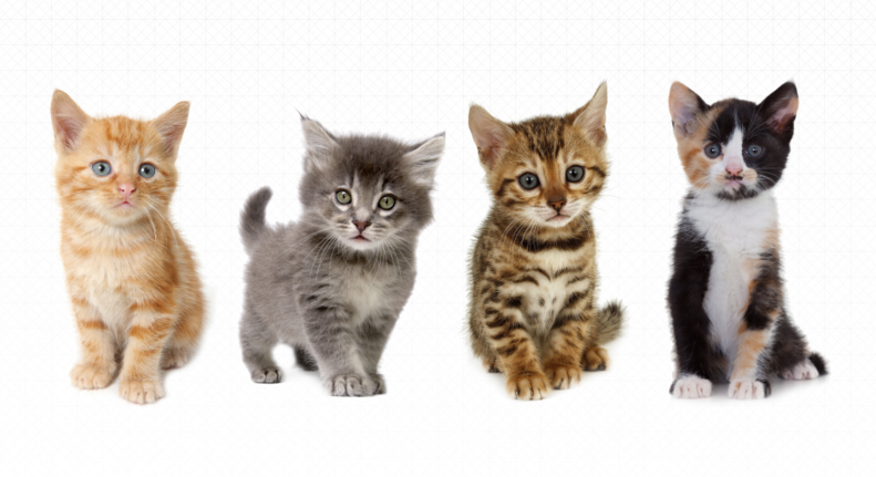 Uber Is Delivering Kittens Today For National Cat Day Blog