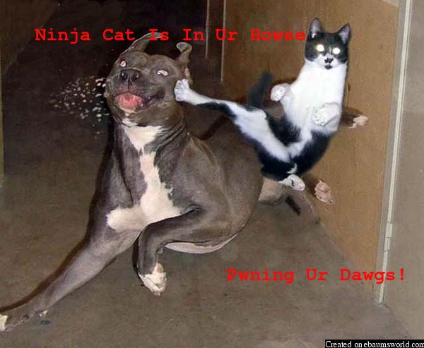 el gato loco le:
