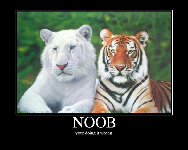 NOOB.png