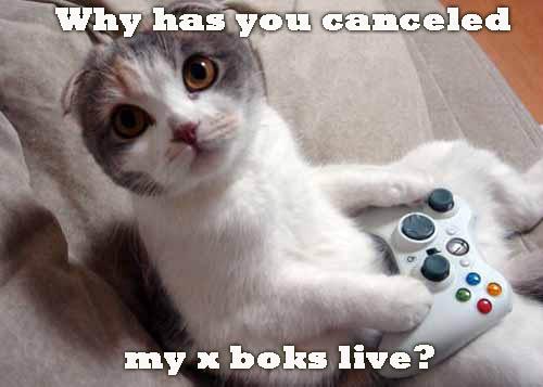 xboxcat.jpg