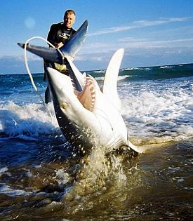 Sharks Attacking People