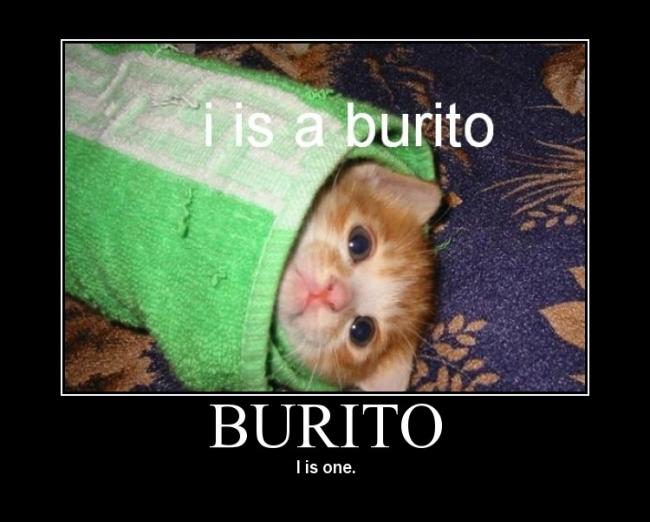 burrito cat sad