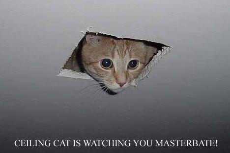 GIFs  Ceiling_cat