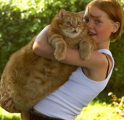 World's Fattest Cat.