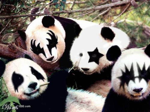 http://media.ebaumsworld.com/picture/rocker107/kiss_pandas.jpg