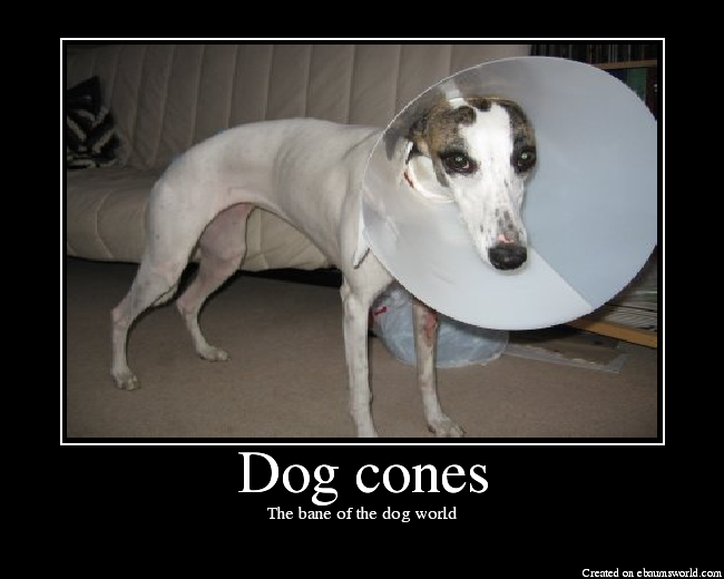 Where Can I Get A Dog Cone